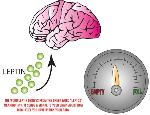 leptin-venus-factor